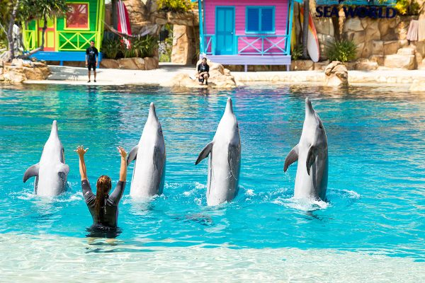 SeaWorldDolphins